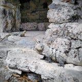 Mayan καταστροφές στοκ φωτογραφία με δικαίωμα ελεύθερης χρήσης