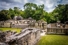 Mayan akropol på den Tikal nationalparken - Guatemala Arkivbild