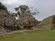 Mayan archaeological monuments of Xunantunich, Belize. One Mayan archaeological monuments of Xunantunich, Belize royalty free stock photos