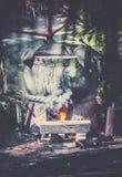 Mayan cauldron. Ancient mayan cauldron in dense mexican jungle Royalty Free Stock Photo