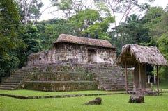 mayan ceibal el fördärvar arkivbilder