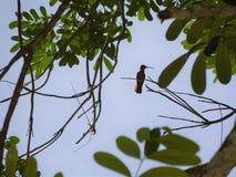 Mayan Colibri, Chichen Itza, Yucatan Royalty Free Stock Photos