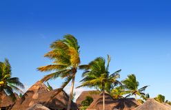 Mayan de palmen blauwe hemel van het riviera tropische schuifdak Stock Afbeeldingen