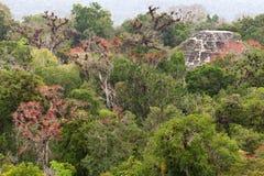 Mayan fördärvar i djungeln Tikal Royaltyfri Fotografi
