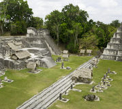 Mayan fördärvar i djungeln Tikal Arkivfoto