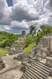 mayan fördärvar tikal arkivfoto