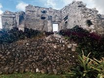 Mayan Flowers Royalty Free Stock Image