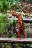 Mayan folk i Mexico Arkivfoto