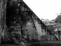 Mayan piramides in Tikal Royalty-vrije Stock Afbeeldingen