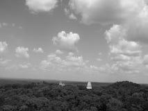 Mayan piramides in Tikal Royalty-vrije Stock Fotografie