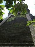 Mayan Pyramid Royalty Free Stock Photo