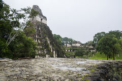 Mayan pyramid. A beautiful example of the mayan pyramids in the national park of Tikal Royalty Free Stock Photography