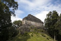 Pyramid partially overgrown in the Dzibanche Mayan complex in Mexico royalty free stock images