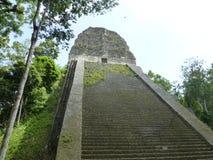 Mayan pyramid in Tikal stock photo