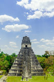 Mayan pyramid by Tikal in Guatemala royalty free stock images