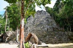 Mayan pyramide i Coba, Mexico royaltyfria foton