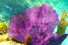 mayan rev riviera för karibisk färgrik korall royaltyfri fotografi