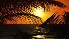 Mayan Riviera Caribbean sunrise beach in Mexico. Mayan Riviera Caribbean sea sunrise beach in Mexico  Quintana Roo stock video