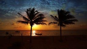 Mayan Riviera palm trees beach sunrise Caribbean stock video