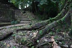 Mayan ruïnes in Palenque Stock Afbeeldingen