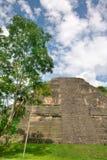 Mayan Ruins. The Mayan Ruins of Tikal in Belize royalty free stock image