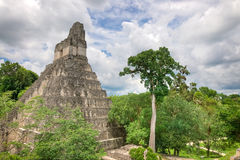 Mayan Ruins. The Mayan Ruins of Tikal in Guatemala stock images