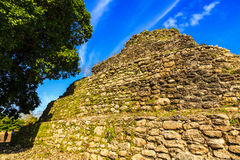 Mayan Ruins in Belize Royalty Free Stock Photo
