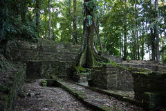 Mayan ruins in Palenque Stock Photo