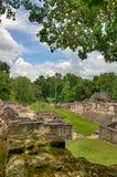 Mayan Ruins of Tikal. The Mayan Ruins of Tikal in Belize stock image