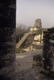Mayan ruins- Tikal, Guatemala Royalty Free Stock Photo