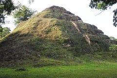 The Mayan ruins of Tikal Royalty Free Stock Photography