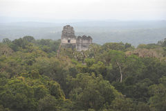 The Mayan ruins of Tikal Royalty Free Stock Photography