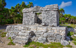 Mayan ruins in Tulum. The Mayan ruins in Tulum, Mexico. The ruins were built on tall cliffs on the Caribbean Sea. Tulum was one of the last cities built and royalty free stock images