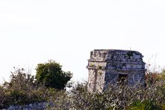 Mayan Ruins before White Background Royalty Free Stock Photography