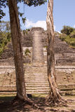 Mayan tempel Royaltyfria Bilder