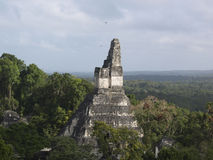 Mayan Tempel in Tikal Royalty-vrije Stock Afbeelding