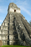 Mayan Temple in Guatemala Royalty Free Stock Photo