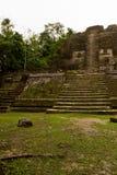 Mayan Temple, Lamanai  Belize Stock Photography