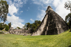 Mayan Temples in Jungle. Ruins of a massive Mayan urban center lie in the rainforest of Guatemala. This area is known as the Tikal National Park and is the Royalty Free Stock Photo