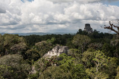 Mayan Temples and Rainforest Canopy. Ruins of an ancient and massive Mayan urban center lie in the rainforest of Guatemala. This area is within Tikal National Stock Images