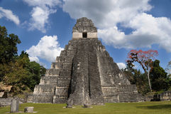 Mayan tikal ruins, guatemala Royalty Free Stock Photo