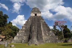 Mayan tikal ruins, guatemala Royalty Free Stock Photo