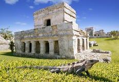 mayan tulum καταστροφών iguana χλόης Στοκ Φωτογραφίες