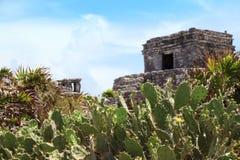 Mayan Tulum fördärvar på den yucatan halvön Fotografering för Bildbyråer