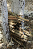 Mayan village wood pile Stock Images