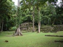 Mayaruinen im Dschungel stockfotos
