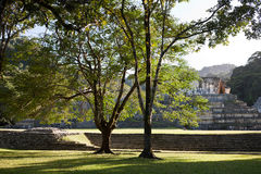 Mayaruinen in Palenque Stockfotografie