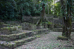 Mayaruinen in Palenque Stockfotos