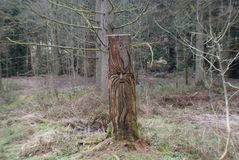 Maybe forest tree carving. I came across this carving on a tree in the middle of maybe forest. strange stock image