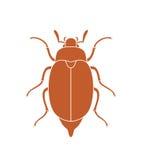 Maybug beetle. Chafer. Vector Illustration. illustration EPS stock illustration